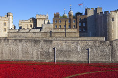 Poppies at the Tower of London Stock Photo
