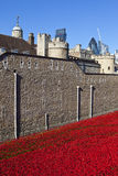Poppies at the Tower of London Royalty Free Stock Images