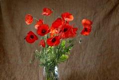 Poppies in the vase Stock Photos