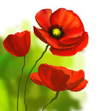 Poppies vector illustration  hand drawn  painted Royalty Free Stock Photos