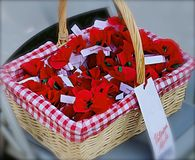 Poppies for veterans Stock Images