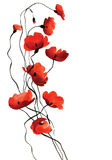 Poppies watercolor branch on white background Royalty Free Stock Photography