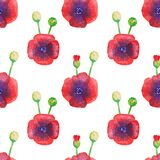 Poppies watercolor pattern isolated on white background. Seamless pattern of stylized poppies isolated on white background. Watercolor illustration of wild Royalty Free Stock Images