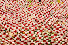 Poppies at Westminster Abbey on Remembrance sunday royalty free stock image