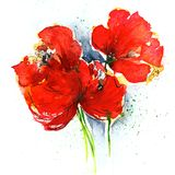 Poppies on white stock illustration