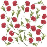 Poppies. White background with poppy flowers royalty free illustration