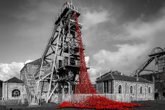 Poppies at Woodhorn colliery Stock Image