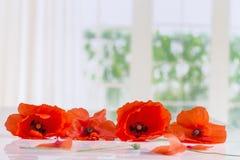 Poppieslying rosso sulla tavola sulle finestre, fondo Fotografia Stock