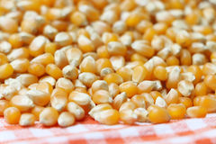 Popping Corn 2 Stock Photo
