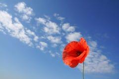Poppy. Red poppy on background sky Royalty Free Stock Image