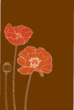 Poppy. Red poppy on a brown background Royalty Free Stock Image