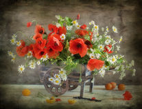 Free Poppy Stock Images - 20375854