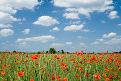 Poppy And Clouds Stock Photos