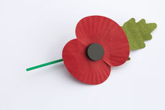 Poppy Appeal for Remembrance / Poppy Day - on White Bac. Poppy for Poppy Day or Remembrance Day on white background royalty free stock images