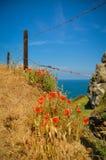 Poppy, Atlantic Ocean, barbed wire Stock Photography