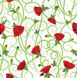 Poppy background Stock Images