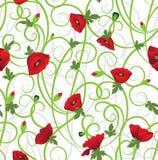 Poppy Background Stock Images