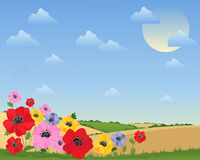 Poppy background Stock Photos