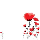 Poppy background Stock Photography