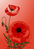Poppy background Royalty Free Stock Images