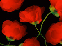 Poppy background illustration Stock Images