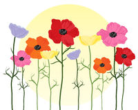 Poppy background Royalty Free Stock Image