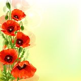 Poppy background stock illustration