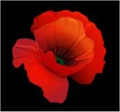 Poppy black. Red poppy on a black background Royalty Free Stock Photography