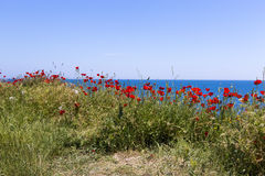 Poppy and Black Sea Royalty Free Stock Photography
