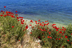 Poppy and Black Sea Royalty Free Stock Photo