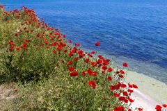 Poppy and Black Sea Stock Images