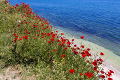 Poppy and Black Sea Stock Photography