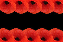 Poppy border Royalty Free Stock Image