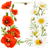 Poppy and Camomile design elements stock illustration