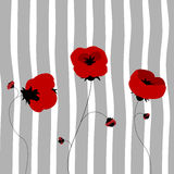 Poppy card Royalty Free Stock Photo