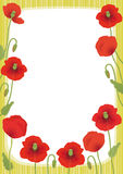 Poppy card Stock Photos