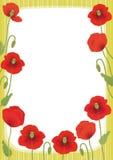 Poppy card Stock Photos