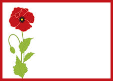 Poppy card Royalty Free Stock Photos