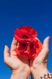 Poppy care Stock Image