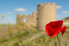 Poppy with castle in background royalty free stock photography
