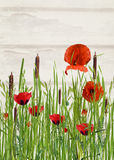 Poppy and cattail in grass Royalty Free Stock Photos