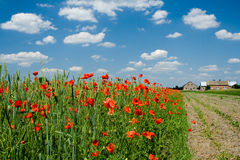 Poppy, clouds and arable field. Arable field with many poppy flowers and cute clouds Stock Photography