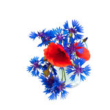 Poppy and cornflower bouquet in glass Stock Photos