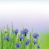 Poppy Cornflower. The illustration of beautiful cornflower background. Vector image Stock Images
