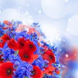 Poppy and cornflower Royalty Free Stock Photos