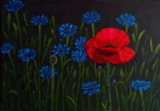 Poppy and cornflowers. Painting royalty free stock photography