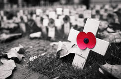 Poppy Cross Fotografia Stock