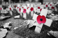 Poppy Cross Photos libres de droits