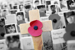 Poppy Cross, Remembrance day display Royalty Free Stock Photo