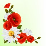 Poppy daisy background Royalty Free Stock Images